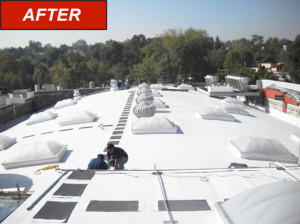 FlexLite Domes - Autoservice - After